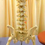骨盤と腰痛のつながりの詳細へ
